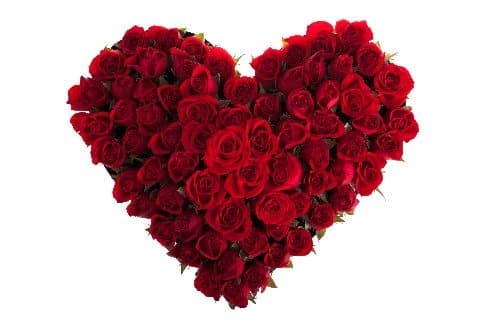 A heart made of red roses on a white background.
